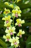 Weggeschoten orchideebloemen Mooie Orchidee Royalty-vrije Stock Afbeeldingen