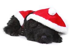 Weggewischter schwarzer Russe-Terrier-Welpe in Santa Suit Lizenzfreie Stockfotografie
