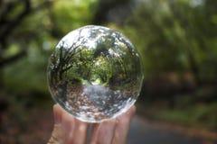 Weglijnen met Dalingsbladeren en Groene die Bomen in Glasbedelaars worden gevangen stock foto