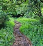Weglood in Tropisch Bos stock foto