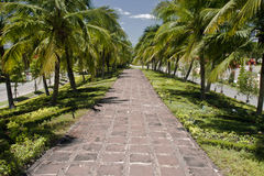 Wegmethode in den Kokosnussbäumen Lizenzfreies Stockfoto