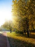 Wegmethode im grünen Park Stockfotos