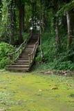 Wegmethode im Wald Stockbilder
