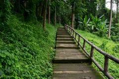 Wegmethode im Wald Lizenzfreie Stockfotos