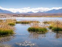 Wegreis in de Andes Stock Foto