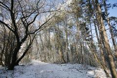 Wegtrog een bevroren bos met vorst en sneeuw in de winter Stock Afbeelding