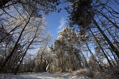 Wegtrog een bevroren bos met vorst en sneeuw in de winter Stock Foto