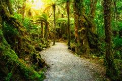Wegweise im Dschungel mit fruchtbarer Anlage; NEUSEELAND, IM APRIL 2017 lizenzfreies stockfoto