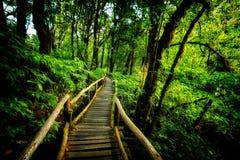 Wegweise in Regenwald-inthanon Berg Thailand Lizenzfreie Stockfotografie