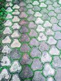 Wegweise umfasst mit kleinem grünem Gras nach Monsun in der attraktiven Art lizenzfreie stockbilder