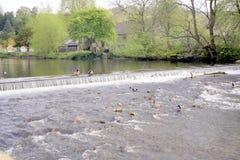 Wehr auf Fluss Ypsilon, Bakewell, Derbyshire. lizenzfreie stockfotos