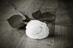 Weiß Stockfoto