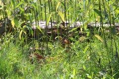 Weiß angebundenes Rotwildkitz im Gras Stockfotografie