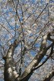 Weiß auf Blau Stockfotografie