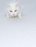 Weiß auf Weiß Stockfotografie
