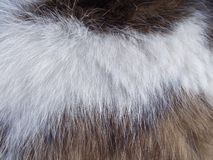 Weiß-braune sechs Katzenbeschaffenheit lizenzfreie stockfotografie