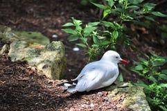 Weiß breasted Vogel Stockfotos