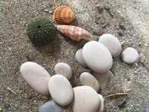 Weiß entsteint Seeigel-ADN-Oberteile auf dem Sand Lizenzfreie Stockfotografie