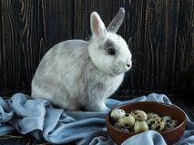 Weiß-graues Kaninchen, das nahe Wachteleiern auf einem dunklen hölzernen Hintergrund sitzt Ostern-Tag stockfoto