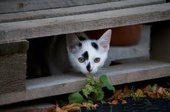 Weiß-haariges Kätzchen ` dixi ` lizenzfreie stockfotografie