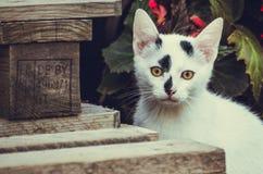 Weiß-haariges Kätzchen ` dixi ` stockfotos