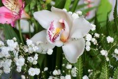 Weiß mit Purpur adert Orchideenblume Stockbild