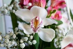 Weiß mit Purpur adert Orchideenblume Stockbilder