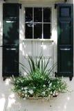 Weiß paned Fenster mit schwarzen Fensterläden und Pflanzerkasten in Charleston, South Carolina Lizenzfreie Stockfotos