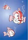 Weiß-rote Fische Stockfotos