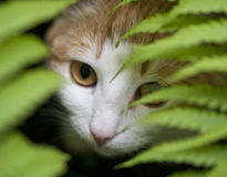 Weiß-rote Katze, die Farn untersucht Lizenzfreie Stockbilder