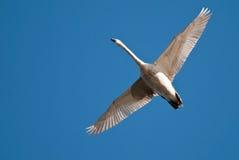 Weiß schwamm Flugwesen im blauen Himmel lizenzfreie stockbilder