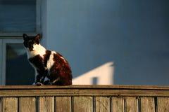 Weiß-schwarze strenge streunende Katze mit den gelben Augen, die auf dem Zaun sitzen und gerade schauen lizenzfreie stockfotos