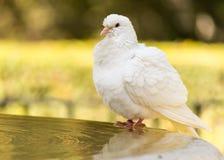 Weiß tauchte, badend am Alcazar, Sevilla, Andalusien, Spanien Lizenzfreies Stockfoto