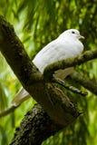 Weiß tauchte in einem Baum stockfotos