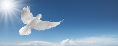 Weiß tauchte im Himmel Stockbild