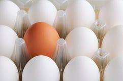 Weiß und braune Eier eins im Behälter horizontal Stockfotos