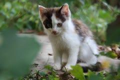 Weiß und Brown-Kätzchen im Garten, Tschechische Republik, Europa Lizenzfreies Stockbild