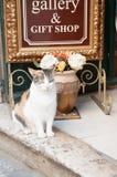 Weiß und Gray Cat, die am Eingang des Shops in Dubrovnik sitzen Lizenzfreie Stockfotos