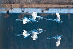 Weiß vier schwamm Flugwesen über ruhigem blauem Wasser lizenzfreies stockfoto