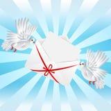 Weiß zwei eine Taube ist getragener Umschlag stock abbildung