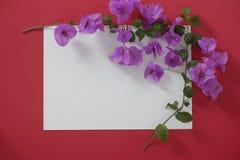 Weißbuch des Modells mit Raum für Text auf rotem Hintergrund und Blume stockbilder