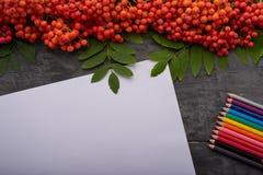Weißbuch, farbige Bleistifte und Bündel der Eberesche auf dem Tisch Lizenzfreies Stockbild