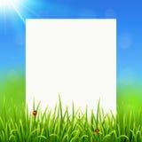 Weißbuchblatt auf sonnigem Sommergrashintergrund Lizenzfreies Stockfoto