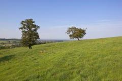Weißdornbäume und -gras Stockfotos