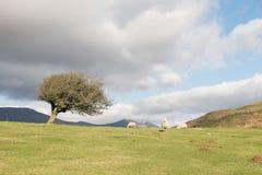 Weißdornbaum Stockfotos