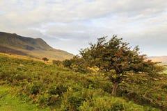 Weißdornbaum auf Cadair Idris Lizenzfreie Stockfotografie