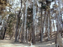 Weißdornwälder Stockbild