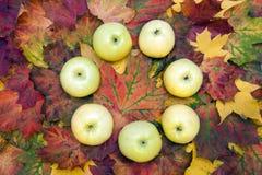 Weiße Äpfel Lizenzfreies Stockbild