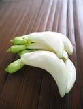 Weiße Agasta-Blume von agasta Anlage, thailändisches Gemüse, Lizenzfreie Stockbilder