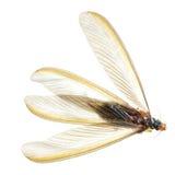Weiße Ameise der Insekttermite Stockfotos